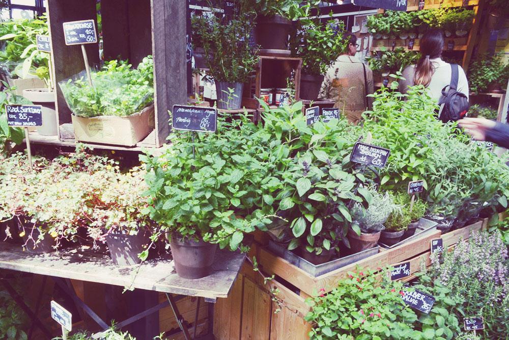 Fresh herbs at Torvehallerne Copenhagen // http://BananaBloom.com #copenhagen #vegan #travel
